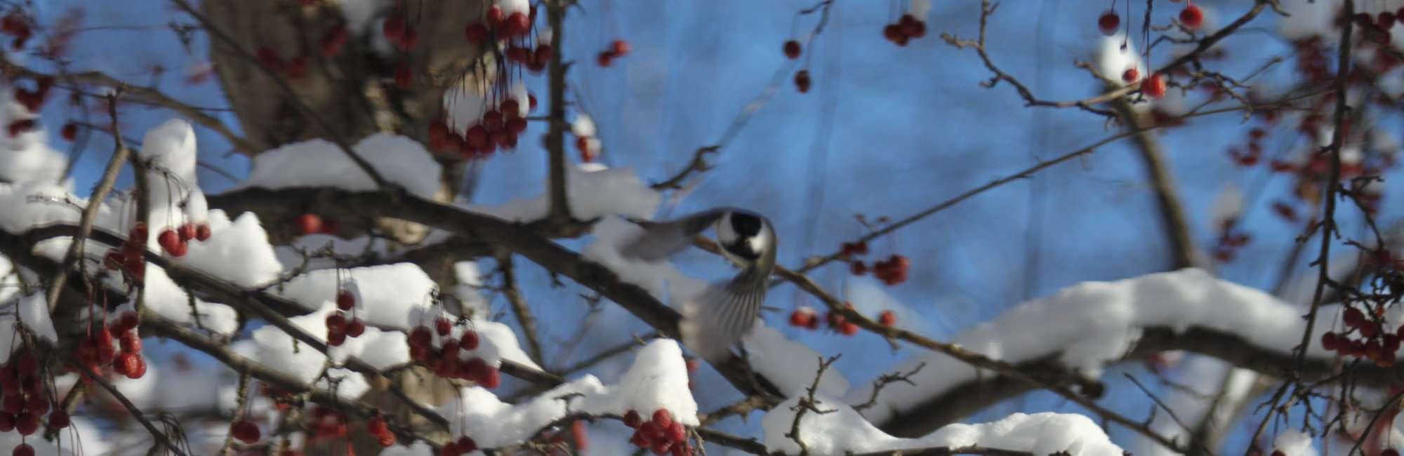 Slide-Winter-Webcam