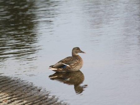 brainerd-nature-photo-gallery-16