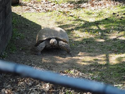 Galapagos Tortoise (Galapagos Islands)