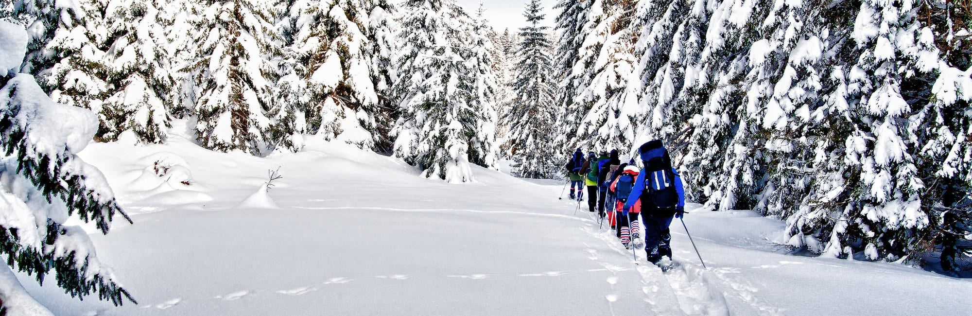 Group of snowshoe hiker in winter forest