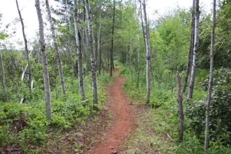cuyuna-mountain-bike-trail-27