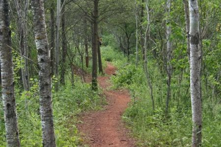 cuyuna-mountain-bike-trail-28