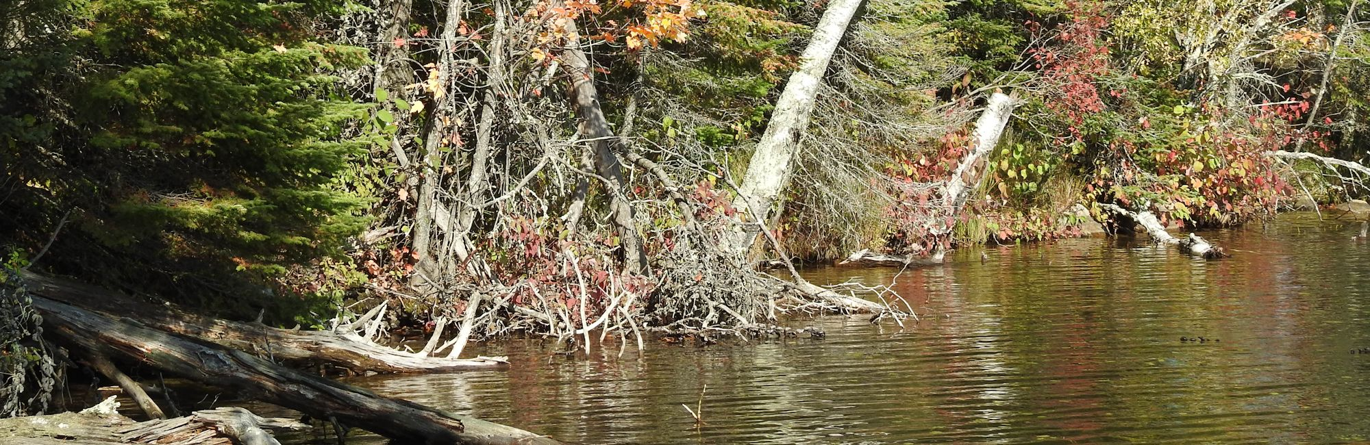 brainerd-draught-fall-colors-1